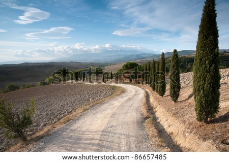 Cypress alley - stock photo