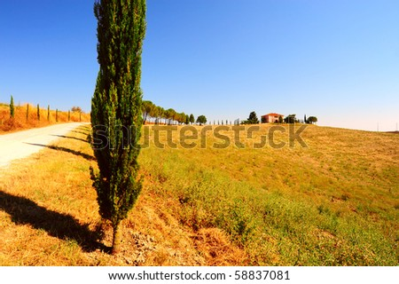 Cypress Alley Leading To The Farmer's House In Tuscany - stock photo