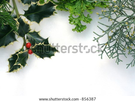 Cypress and holly branches on snow - stock photo