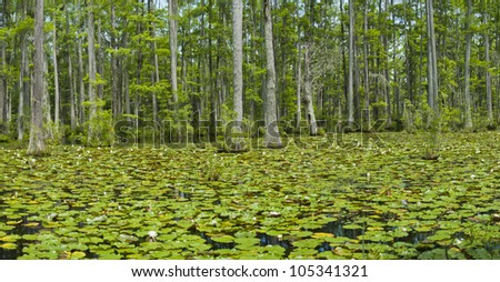 Blue Bayou Stock Photos Royalty Free Images Vectors Shutterstock
