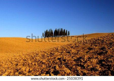cypress group in tuscany landscape, val d orcia - stock photo