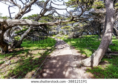 Cypress Grove Trail at Point Lobos State Natural Reserve is ideal for hiking, walking running, along the rugged Big Sur coastline, near Carmel and Monterey, CA. on the California Central Coast. - stock photo
