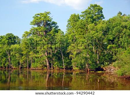 Cypress Marsh near New Orleans, Louisiana - stock photo