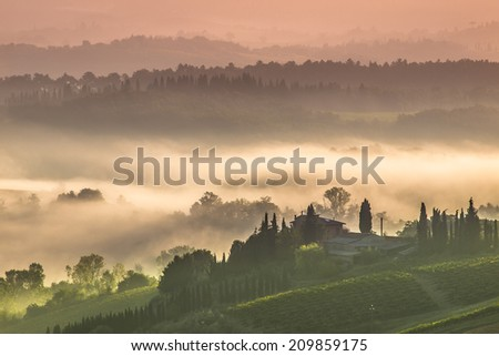 Cypress on the Hills of Tuscany on a Foggy morning
