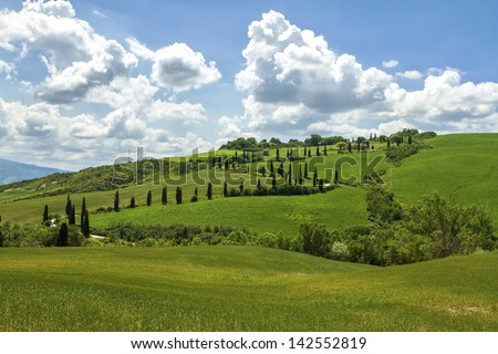 Cypress road - stock photo