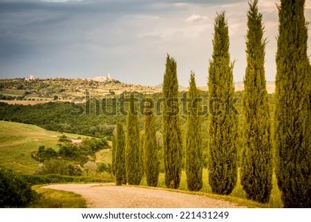 Cypress road to Montalcino, Tuscany, Italy - stock photo
