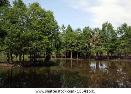 Cypress Swamp at Avery Island Louisiana - stock photo