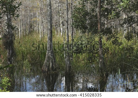Cypress Swamp in Florida - stock photo