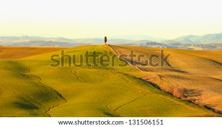 Cypress tree, rolling hills and green field, rural landscape in Crete Senesi, Siena, Tuscany. Italy - stock photo