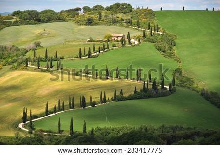 Cypress trees along winding rural road. Tuscany, Italy - stock photo