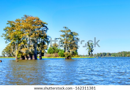 Cypress Trees in Atchafalaya Basin, turning golden in fall. - stock photo