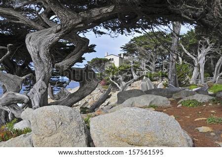 Cypress Trees,  Monterey Peninsular, California - stock photo