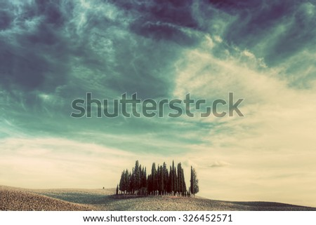 Cypress trees on the field in Tuscany, Italy at sunset. Tuscan landscape in vintage, retro mood - stock photo