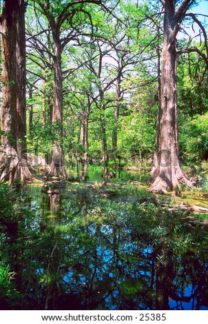 Cypress trees reflected in stream at Hamilton Pool State Park, Texas. - stock photo