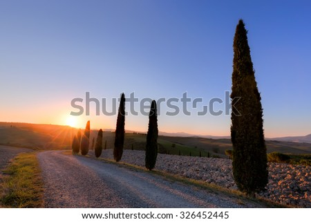 Cypress trees road in Tuscany, Italy at sunrise. Tuscan landscape, Val d'Orcia region