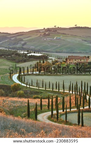Cypress Tuscany in the beautiful landscapes of the setting sun. - stock photo