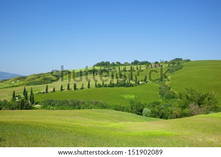 cypresses tree dancing up hill at La Force, famouse in Val D'orcia area, province of Siena, Italy - stock photo
