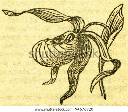 """Cypripedium calceolus - an illustration from the book """"In the wake of Robinson Crusoe"""", Moscow, USSR, 1946. Artist Petr Pastukhov - stock photo"""