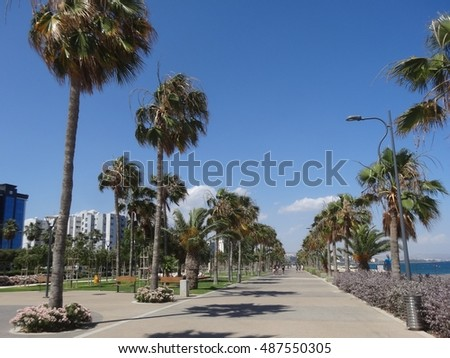 Cyprus, Limassol, Palm trees