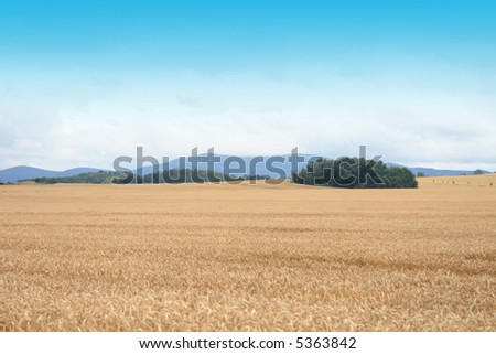 czech country with gold corn