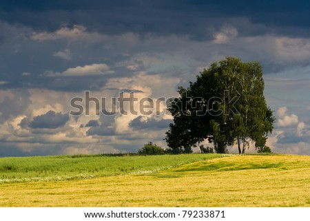 Czech countryside with birch trees and thunder-clouds before the evening storm - stock photo