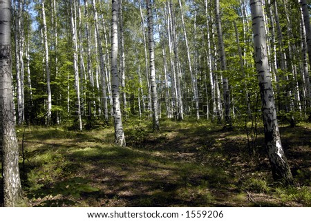 czech forrest - stock photo