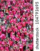 CZECH REPUBLIC,PRAGUE-JUNE 10: Participants and guests celebrate after the final ceremony speeches at Avon Walk for Breast Cancer on JUNE 10, 2012 in  Prague, Czech Republic - stock photo