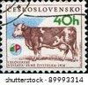 CZECHOSLOVAKIA - CIRCA 1976: A stamp printed in Czechoslovakia shows cow, circa 1976 - stock photo