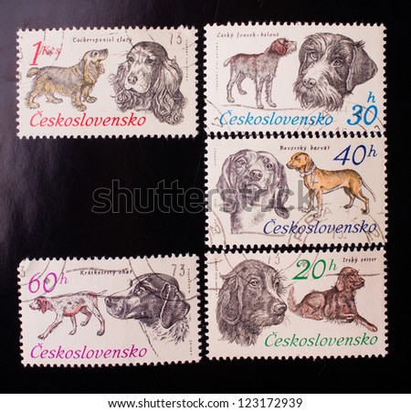 CZECHOSLOVAKIA - CIRCA 1973: A stamp printed in Czechoslovakia shows five kinds and colors of dogs , circa 1973. - stock photo