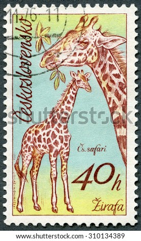 CZECHOSLOVAKIA - CIRCA 1976: A stamp printed in Czechoslovakia shows Giraffes, series African animals in Dvur Kralove Zoo, circa 1976 - stock photo