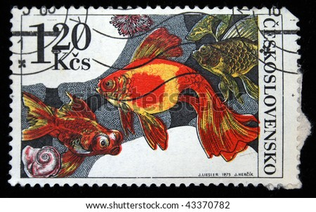 CZECHOSLOVAKIA - CIRCA 1975: A Stamp printed in Czechoslovakia shows gold fishes, circa 1975