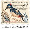 CZECHOSLOVAKIA - CIRCA 1959: A stamp printed in Czechoslovakia, shows Great Spotted Woodpecker, circa 1959 - stock photo