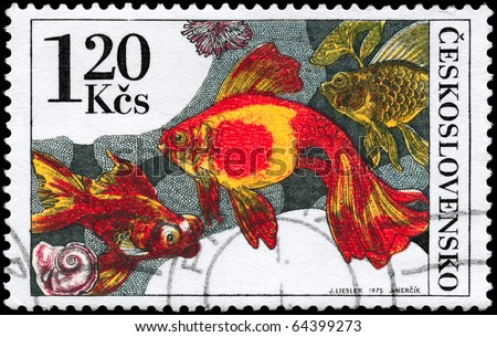 "CZECHOSLOVAKIA - CIRCA 1975: A Stamp printed in CZECHOSLOVAKIA shows image of a Goldfishes from the series ""Tropical Fish (Aquarium)"", circa 1975"