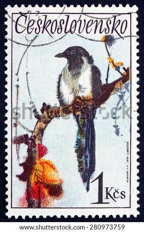 CZECHOSLOVAKIA - CIRCA 1972: a stamp printed in the Czechoslovakia shows Black-billed Magpie, Pica Hudsonia, Bird, circa 1972 - stock photo