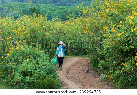 DA LAT, VIET NAM- NOV 10: Asian woman walk on path of countryside, bush of wild sunflower bloom in yellow, colorful scene, Vietnamese farmer with beautiful nature, Dalat, Vietnam, Nov 10, 2014