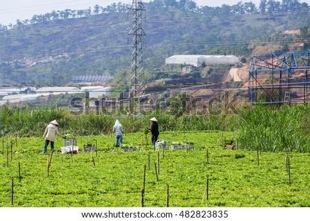 DA LAT, VIETNAM - MAY 15, 2016: Farmer on vegetable field at Suoi Vang lake, Langbiang mountain, Da Lat, Vietnam