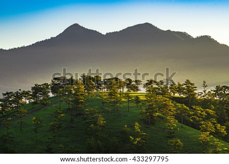 DA LAT, VIETNAM, May 30, 2016: Pine forest with colorful cloud, Da Lat is highland city fog in the morning. Da Lat is one of the beautiful city in Viet Nam.