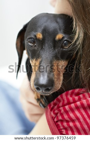 Dachshund dog looking over shoulder - stock photo