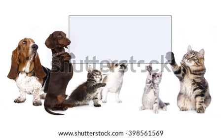 dachshund dog paws holding banner - stock photo