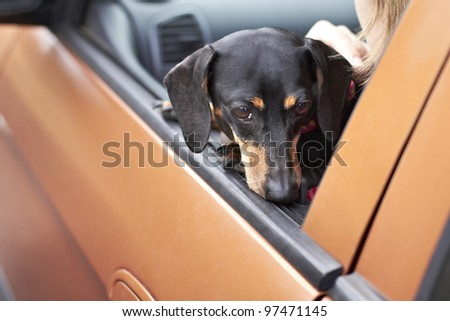 Dachshund dog resting head on vehicle door - stock photo