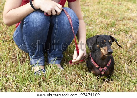 Dachshund dog sitting in grass next to owner - stock photo