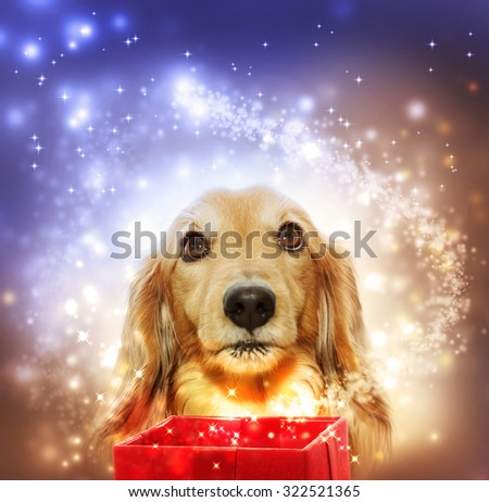 Dachshund dog with a magic box and a shooting star - stock photo