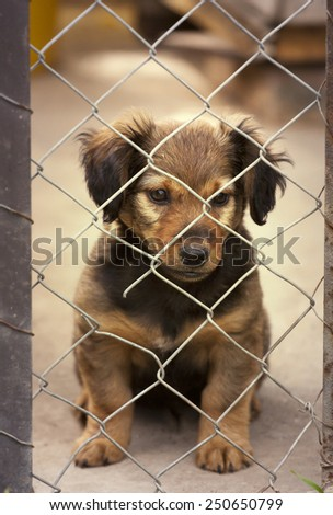 Dachshund puppy sitting behind the wire mesh fence - stock photo