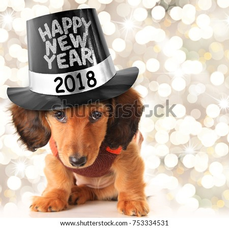 Dachshund puppy wearing a Happy New Year 2018 top hat.
