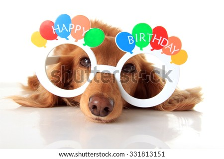 Dachshund puppy wearing Happy Birthday glasses. Also available in vertical.  - stock photo