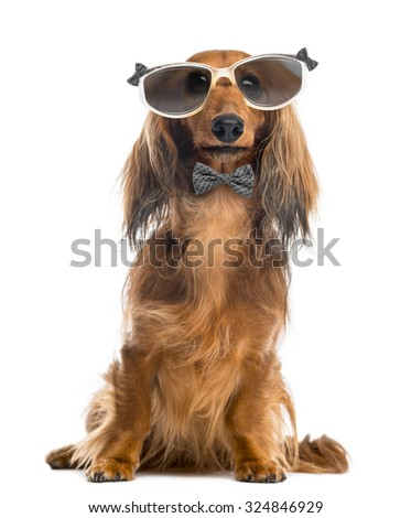 Dachshund, wearing glasses and a bow tie in front of a white background - stock photo