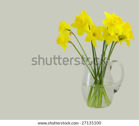 daffodil in a pitcher isolated on grey - stock photo