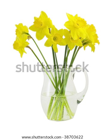 daffodil in a pitcher isolated on white - stock photo