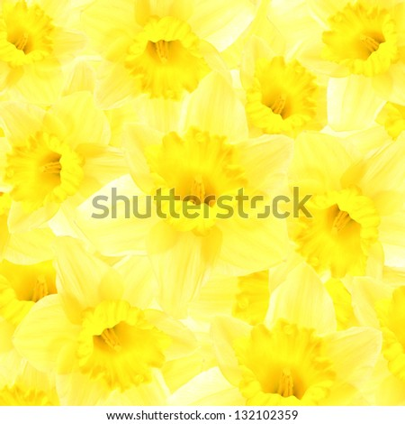 Daffodils background - stock photo