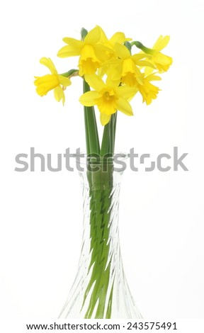 Daffodils in a glass vase